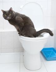 kat blærebetændelse symptomer